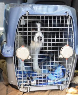 Vračilo kupnine zaradi deformirane nosilne kletke za psa